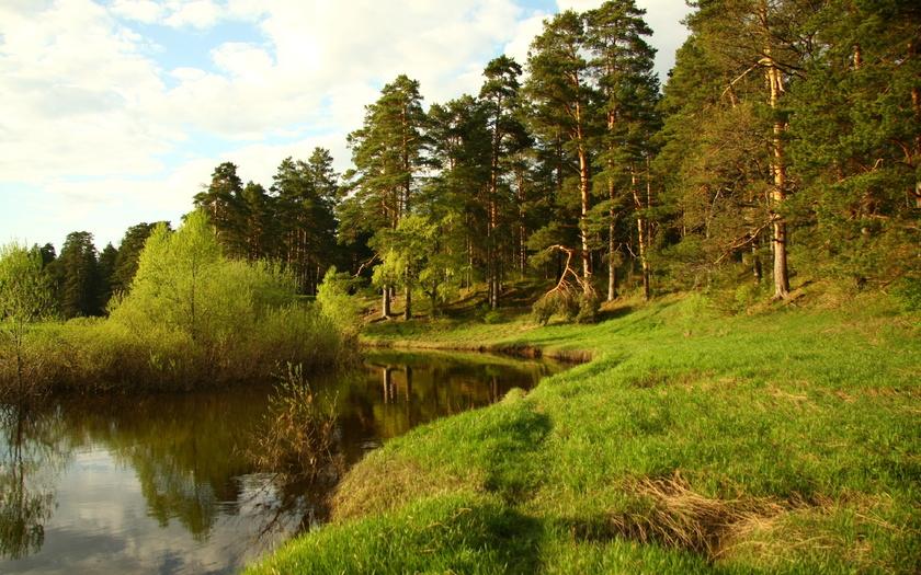 картинки на рабочий стол лето природа лес № 489033 бесплатно